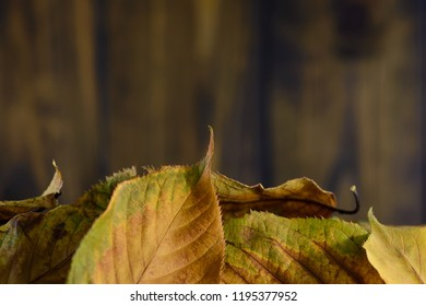 Autumn leaves on a brown wooden board background