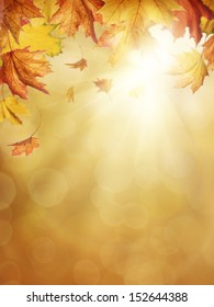 Autumn leaves on colorful background