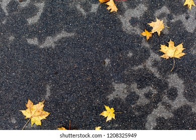Autumn leaves on dark grey wet pavement background
