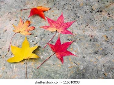 Autumn leaves on decorative paper