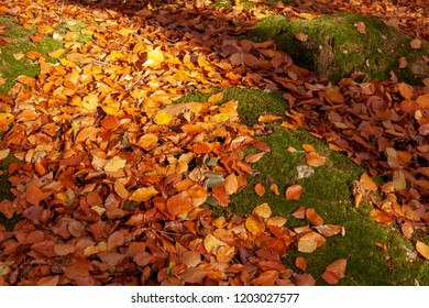 Autumn leaves on a forest floor. Golden red and orange fallen on green moss under woodland trees