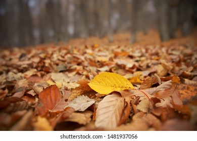 Autumn leaves on the forest ground. Close-up nature composition.