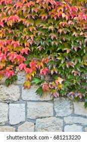 Autumn leaves on a fortress wall made of stones at Kalemegdan in Belgrade, Serbia