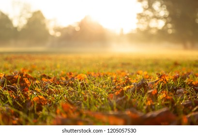 Autumn leaves on the grass during a foggy sunrise in a park. Lyon, France. Shallow D.O.F.