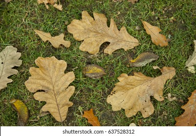 Autumn leaves on grass, nature