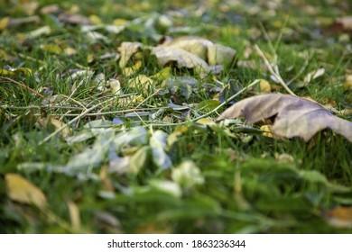 Autumn leaves on ground, seasonal change, nature and landscape