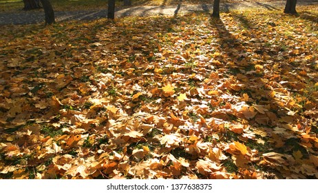 Autumn leaves on ground with sunlight rays. Ground covered with fallen leaves. Golden autumn in forest with fallen leaves.