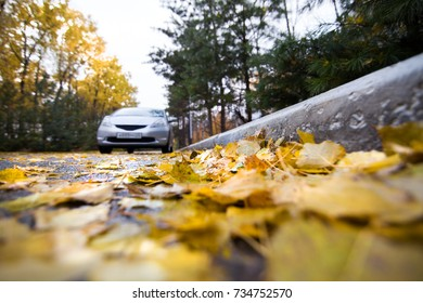Autumn leaves on a road and a car on the background
