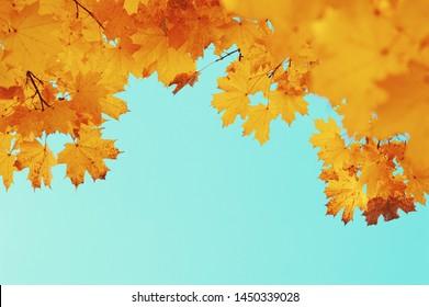 Autumn leaves on the sky and sun
