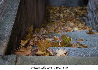 Autumn leaves on steps