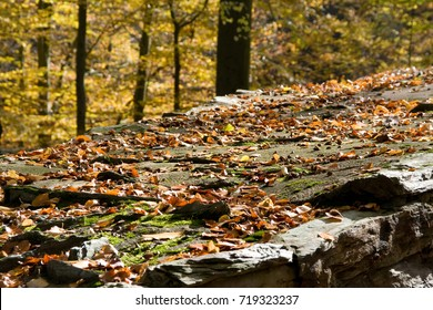 autumn leaves on a stone wall