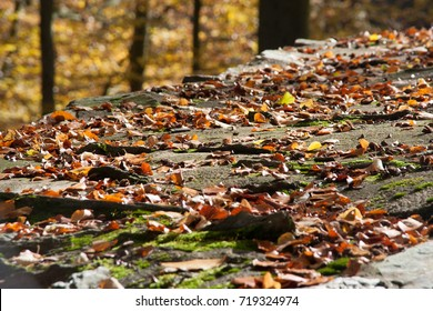 autumn leaves on stone wall