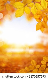 Autumn leaves on the sun and blurred trees . Fall background.