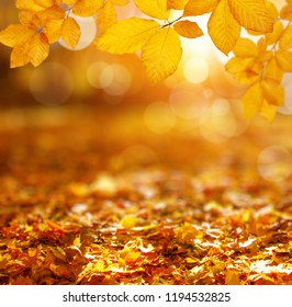 Autumn leaves on the sun and blurred forest.