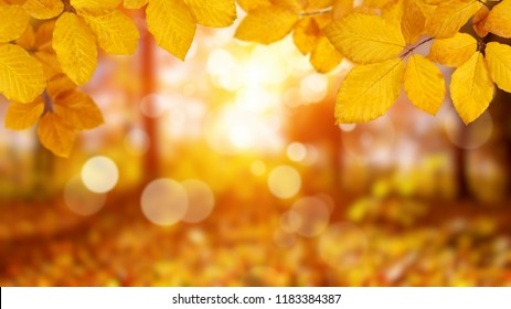 Autumn leaves on the sun. Fall blurred background.