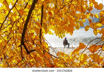 Autumn leaves on the sun. Fall blurred background. Image of fisher on background of autumn leaves.