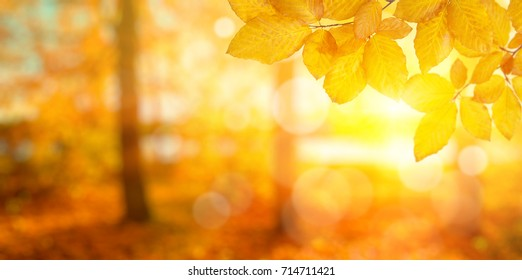 Autumn leaves on the sun. Fall blurred background. - Shutterstock ID 714711421