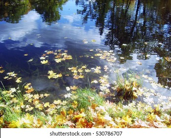 The autumn leaves on the water