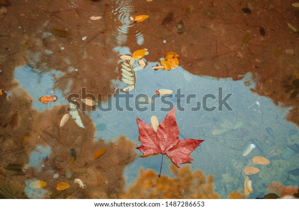 Autumn leaves on water puddle