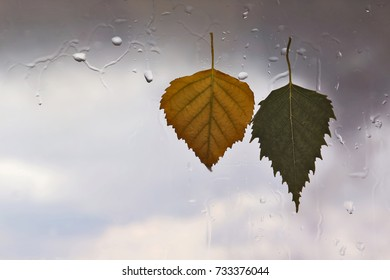 autumn leaves on a wet window on a background of rainy weather