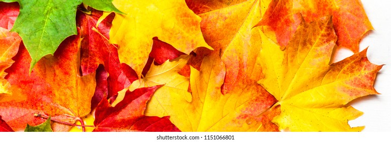 Autumn leaves on white Background, flat lay. Heap of Red, yellow and green Marple leaves, close up
