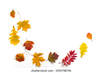 Autumn leaves on the white background. Copy space for text.