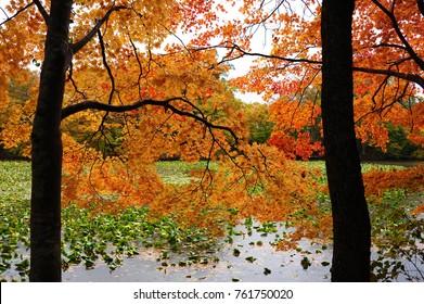 autumn leaves in Onuma National Park, Hokkaido, Japan