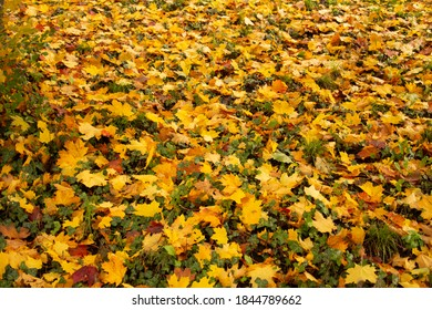 Autumn leaves in orange and reds and greens. Fall colors, original photography