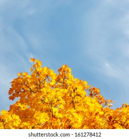 Autumn leaves over blue sky background