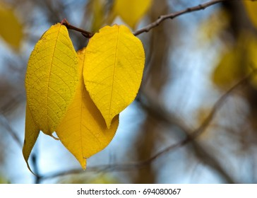 autumn leaves, photographed on the nature