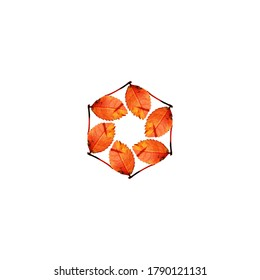 Autumn leaves placed inside a hexagon shape, on a white background, useful for blog posts, cards, banners, marketing materials.