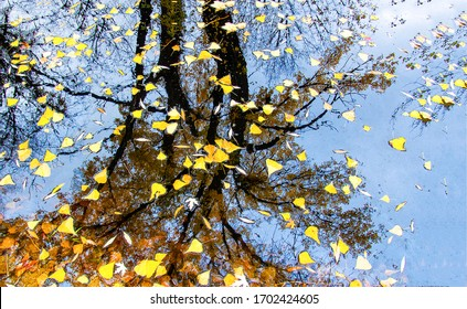 Autumn leaves in puddle of water. Autumn puddle leafs. Autumn puddle leaves. Autumn leaves in puddle