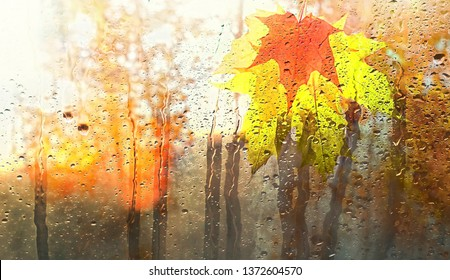 autumn leaves for rainy glass. concept of fall season. beautiful abstract autumn background. orange maple leaves in rain. rainy day weather