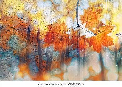 autumn leaves for rainy glass. concept of fall season. blurred abstract autumn background. orange maple leaves in rain. rainy day weather