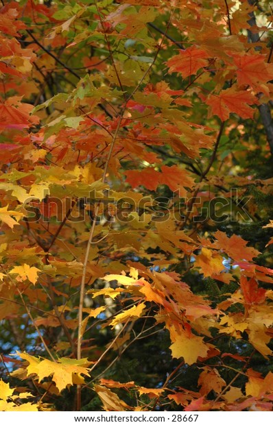 Autumn leaves really are beautiful, so I've taken photos of the beautiful changing colors.