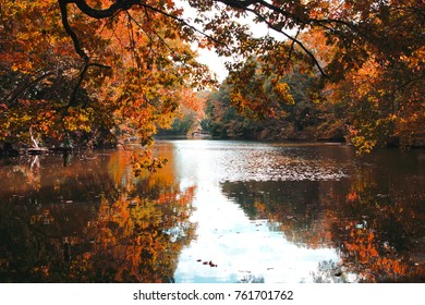 Autumn leaves reflected on the surface of the water