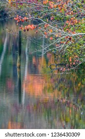 Autumn leaves reflecting off of the pond