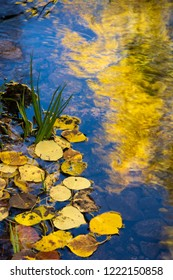 Autumn leaves reflecting in water.