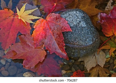 Autumn leaves and rocks in water
