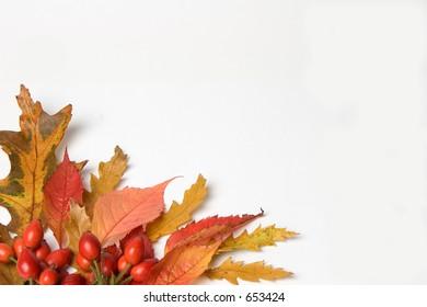Autumn leaves & Rosehip border