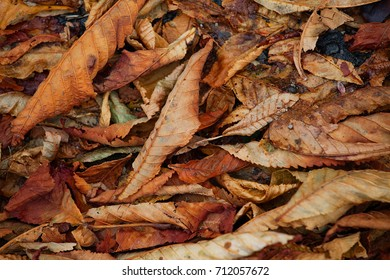 Autumn leaves - Season Backgrounds