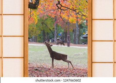 The autumn leaves season with beautiful deers and Japanese door styles