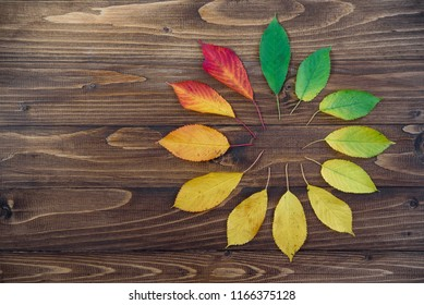 Autumn leaves set in a circle passes from green to red on a wooden background. The concept of changing the season.