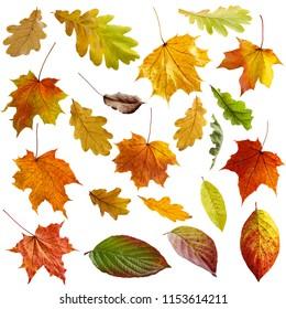 Autumn leaves set. Isolated on white background