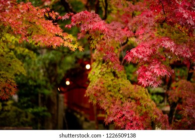 Autumn leaves and Shrine in Kyoto Japan