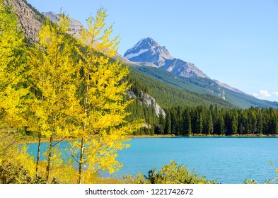 Autumn leaves at the side of Waterfowl Lake, Banff National Park, Canadian Rockies, Alberta, Canada