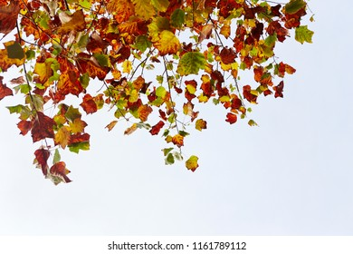 Autumn leaves with sky background