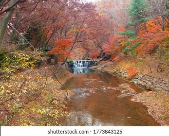 Autumn leaves in South Korea