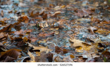 Autumn Leaves in stream water