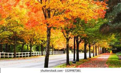 Autumn leaves in a suburban neighborhood.  Pathways and roads in the background.